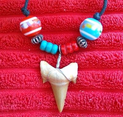 Fossil Shark Tooth Necklace - 011