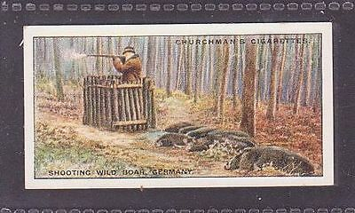 """From 25 """"Sports & Games in Many Lands"""" by Churchman 1929 #9 Shooting Boar German"""