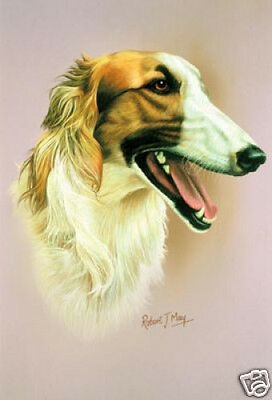 Robert J. May Head Study - Borzoi (RMDH024)