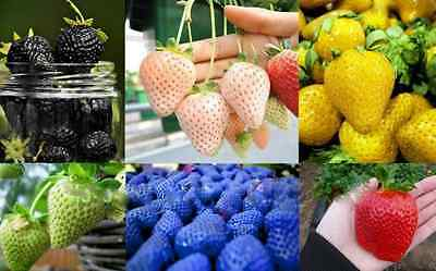 Strawberry Strawberries 175+ Seeds Fruits Black White Blue Red Green UK SELLER!