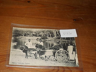 Old CEYLON  postcard our ref #55630 RACING HACKERIES