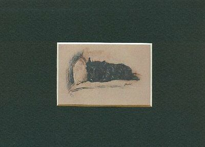 -- Cairn Terrier - Dog Art Print - Dawson CLEARANCE