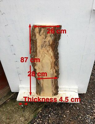 R50 Field Maple Some Nice Figuring In Places Decorative Plank Wood Bark Edge