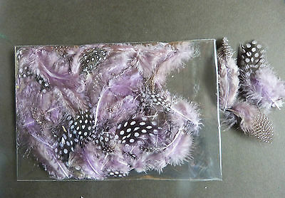 Guinea * Fowl * Dyed * Feather * Feathers * Lilac * Fluffy * Pack/NOT FOR NAILS