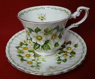 ROSINA QUEENS china SPECIAL FLOWERS pattern CUP & SAUCER Set Christmas Rose