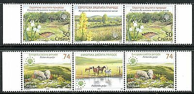 959 SERBIA 2016 - European Nature Protection - Sheep - Snowdrop - Middle Row MNH