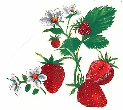 Strawberry Cluster Select-A-Size Waterslide Ceramic Decals Xx