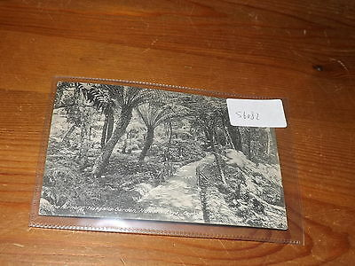 Old CEYLON  postcard our ref #56082 THE FERNERY HAKGALLA GARDEN NUWARA ELIYA