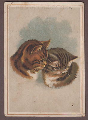 Jersey Coffee Dayton Spice Mills Ohio Victorian Trade Card Pair Of Cats