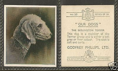 Rare 1939 UK Godfrey Phillips Our Dogs Dog Art Cigarette Card BEDLINGTON TERRIER