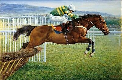 Stunning Study of Champion Hurdler Istabraq by Sue Crawford Cheltenham Small