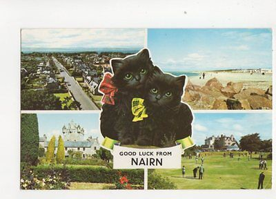 Good Luck From Nairn 1967 Postcard Black Cats 087b