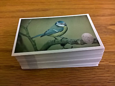 Emerald trade cards: Birds and their Eggs complete full set