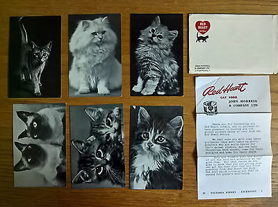 Morrell cat food trade cards postcards: Red Heart Cats complete full set