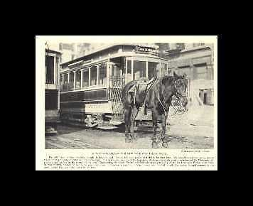 NYC Police - 1923 Vintage Horse Print - Matted