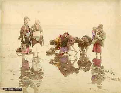 Japon, Shell picking  Vintage albumen print  Tirage albuminé aquarellé  21x2