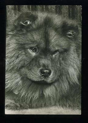 165536 CHOW CHOW Dog Old PHOTO PC