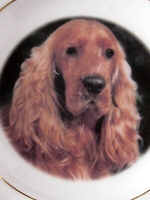 Vintage Orange Rowan Red Cocker Spaniel China Pin Dish By Faithful Friends