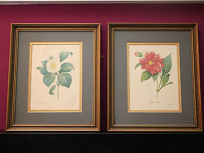 2 X P J Redoute Vintage Prints, Botanical, Framed, Picture, French, Gilt