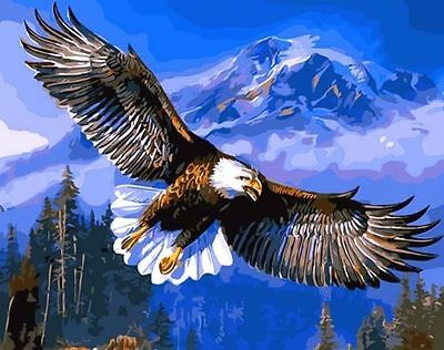 DIY Paint By Number On Canvas Digital Oil Painting Kit Flying Eagle ☆