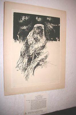 HAWK 19/250 Limited ETCHING by Jack Coughlin AAA 5th Ave. NYC BIRD PRINT 1960-70