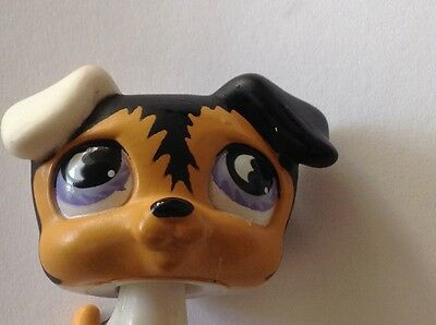littlest pet shop.Tri- coloured jack russell .purple moon shaped eyes LPS toys.