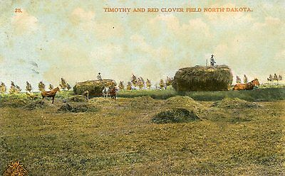 Timothy And Red Clover Fields Of North Dakota Postcard Mailed 1910