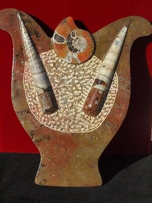 """8.0"""" ORTHOCERAS and Ammonite Fossil Plate from Morocco"""