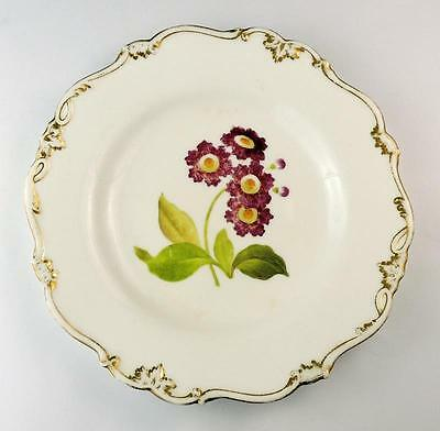 BOTANICAL Antique PORCELAIN PLATE Early 19th Century HAND PAINTED