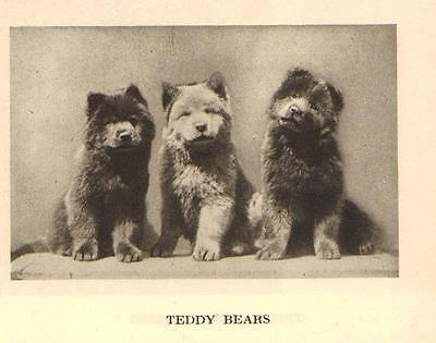 "Chow Chow Pups ""P"" - 1931 Vintage Dog Print - MATTED"