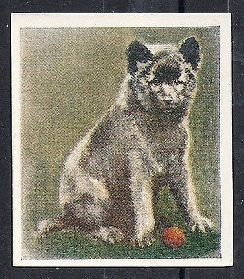 1939 Our Dogs Puppies Dog Art Godfrey Phillips Cigarette Card KEESHOND - Wide