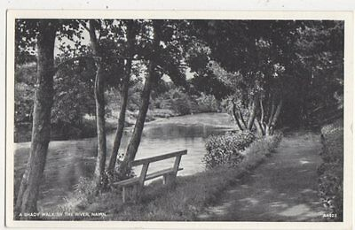 A Shady Walk By The River Nairn Vintage Postcard 439a