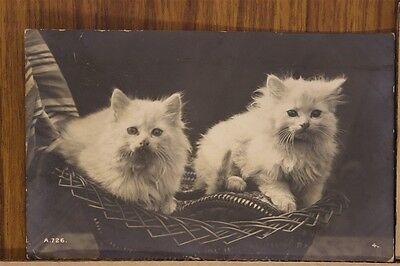 ANTIQUE 1910's POSTCARD Cats Kittens Feline White in Basket Posted