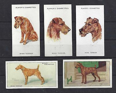 Rare Vintage 1929 - 1979 UK Dog Art Cigarette Card Collection x 5 IRISH TERRIER