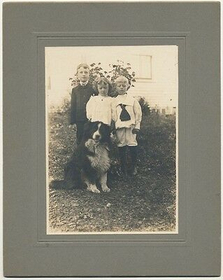 CUTE Family  cabinet photo! Three children staring at their happy Border Collie!