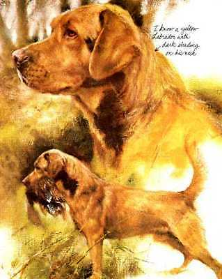 Yellow Labrador Retriever - Vintage Dog Art Print - Poortvliet