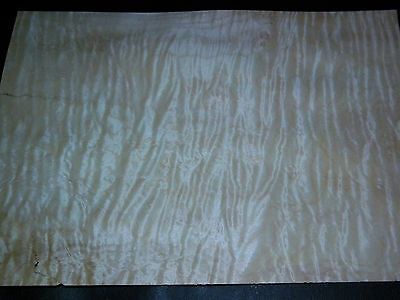Curly Maple raw wood veneer, 9.5 x 13 inches. 1/42nd thick              r7726-24