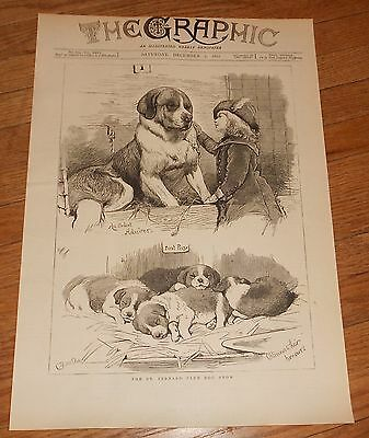 1882 Antique Print of a St. Bernard Show Saint Bernard Dog