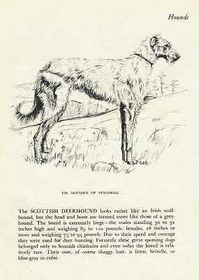 Scottish Deerhound - 1945 Vintage Dog Print - G. Cook