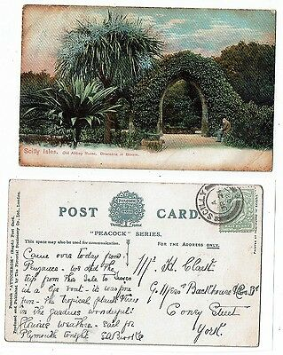 Cornish Post Card Old Abbey Ruins Dracenas In Flower Scilly
