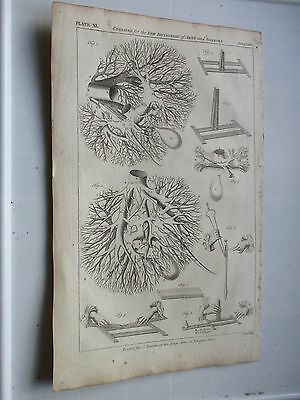 1751 The Liver Medicine Anatomy Superb Engraving Plus Text