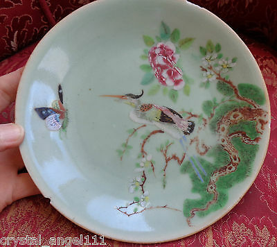 Antique Chinese 1860  Famille Rose Cantonese  Wall Plate : Rare Bird Design 2