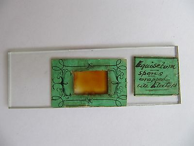 Very Unusual Antique Collectors Microscope Specimen Slide . See Labels !