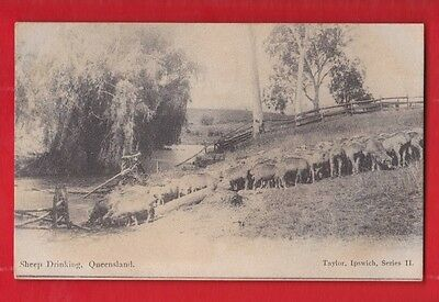 Australia, Sheep drinking, Queensland, posted 1905 postage due, Postcard