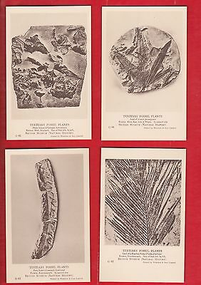 British museum, Natural history. Tertiary Fossil plants, G.5. 9/10 postcards