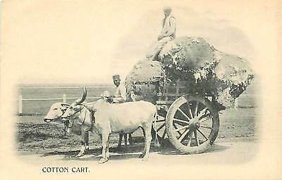 Indian, Oxen Drawn Cotton Cart, Two Men with Full Load of Cotton, UDB