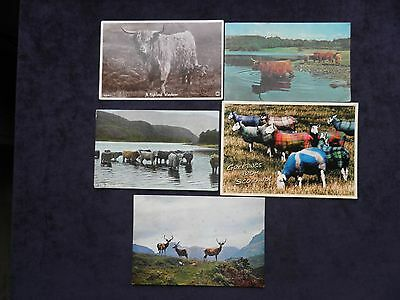 5 Scottish Postcards Animals, Highland Cattle, Red Deer, Kyloe Cattle, Sheep