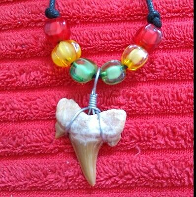 Fossil Shark Tooth Necklace - 016