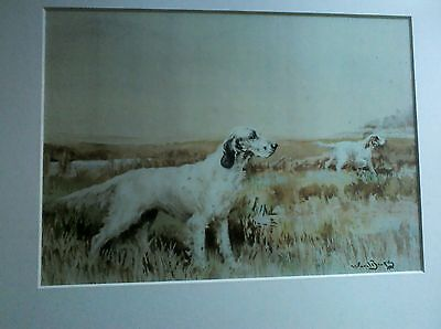 English Setter mounted print by Ward Banks. 28mm x 20 mm