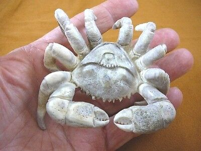 (crab-1) rock shore Crab of shed ANTLER figurine Bali detailed carving crabs